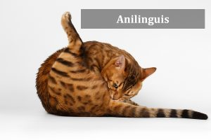 Anilingus