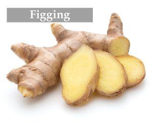 figging mit Ingwer Wurzel